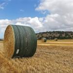Barn-Quality Hay